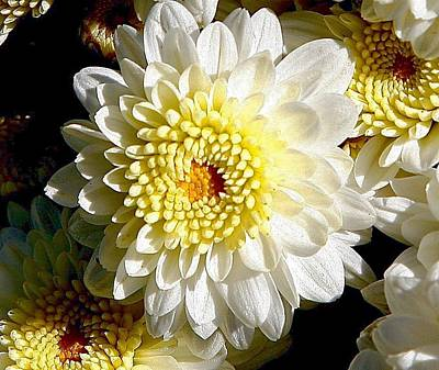 Digital Art - Chrysanthemum by Carrie OBrien Sibley