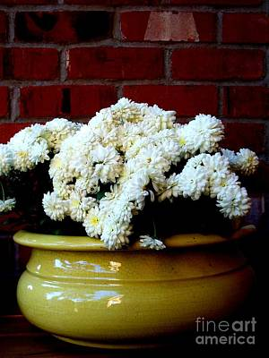 Autumn Photograph - Chrysanthemums In A Yellow Pot by Tanya  Searcy