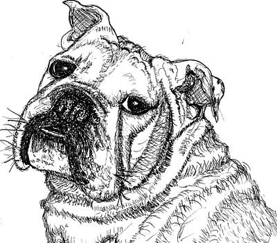 English Bull Dog Drawing - Chunky by DJ Laughlin