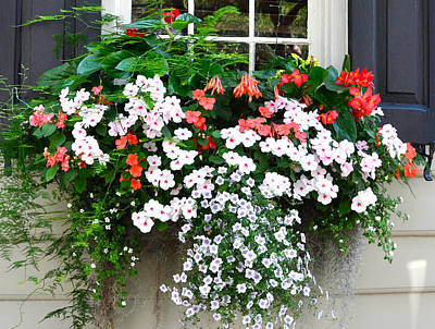 Photograph - Church Street Window Box by Lori Kesten