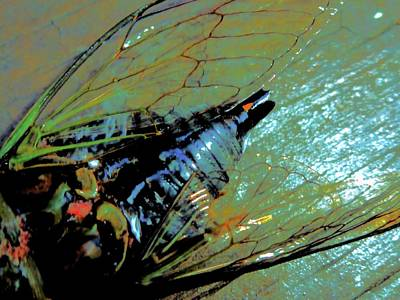 Photograph - Cicada Abstract by Beth Akerman