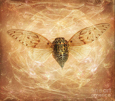 Scanography Photograph - Cicada In Amber by Janeen Wassink Searles