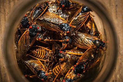 Cicada Madness Art Print