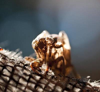 Cicada Photograph - Cicada Shell  by Wilma  Birdwell
