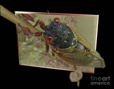 Photograph - Cidica 3d by Donna Brown