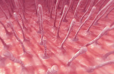 Biomedical Illustration Photograph - Cilia by MedicalRF.com