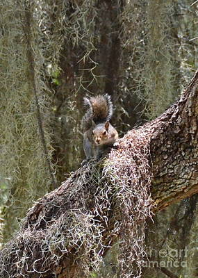 Photograph - Circle B Squirrel by Carol  Bradley