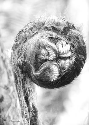 Fiddleheads Photograph - Circle Of Life - Hapu'u Fiddlehead Black And White by Kerri Ligatich
