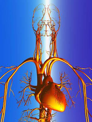 Circulatory System Art Print by Pasieka