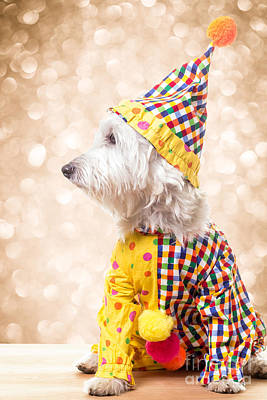 Westie Terrier Photograph - Circus Clown Dog by Edward Fielding