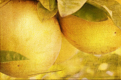 Grapefruit Digital Art - Citrus Tang by Margaret Hormann Bfa