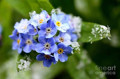Genus Photograph - Clash Of Seasons Spring Snow by Thomas R Fletcher