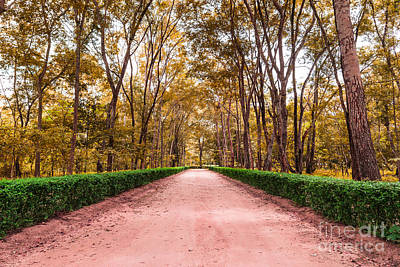 Clay Road In The National Park Art Print by Mongkol Chakritthakool
