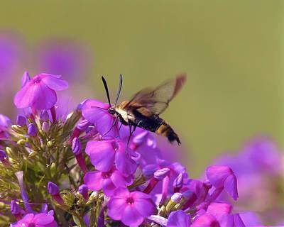 Digital Art - Clearwing - Hummingbird Moth by J Larry Walker