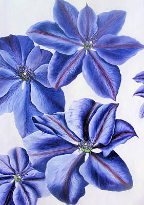 Clematis Painting - Clematis On A Pale Background by John Davies
