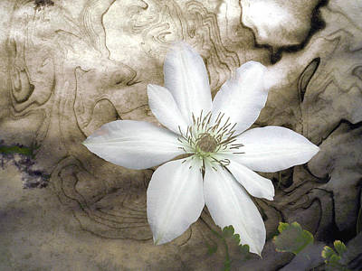 Photograph - Clematis by Richard Ortolano