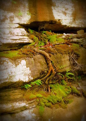 Photograph - Cliff Growth by Cindy Wright