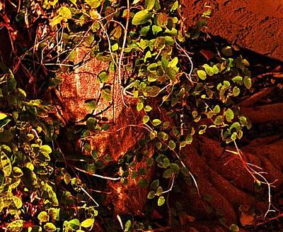 Climbing Magic Plant Art Print by Susana Sanchez Giraud
