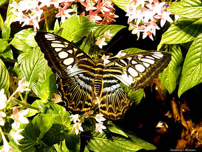 Ebsq Digital Wall Art - Photograph - Clipper Butterfly by Kimmary MacLean