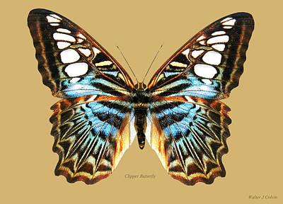Digital Art - Clipper Butterfly by Walter Colvin
