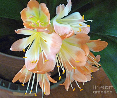 Clivia Art Print by Louise Peardon