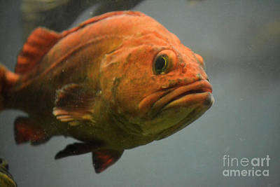 Photograph - Close And Fishy by Traci Cottingham