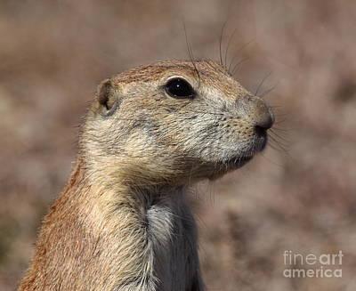 Prairie Dogs Photograph - Close On Prairie Dog by Robert Frederick