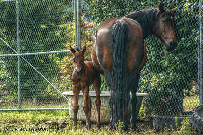 Animals Photograph - Close To Mama by Tyra  OBryant