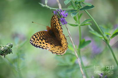 Photograph - Close-up Butterfly by Mary Mikawoz