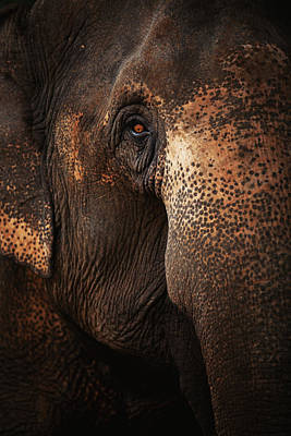 Part Of Photograph - Close Up Face Of Thai Elephant by presented by Zolashine