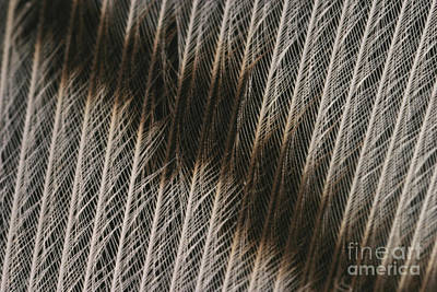 Designs In Nature Photograph - Close-up Of A Turkey Feather by Ted Kinsman