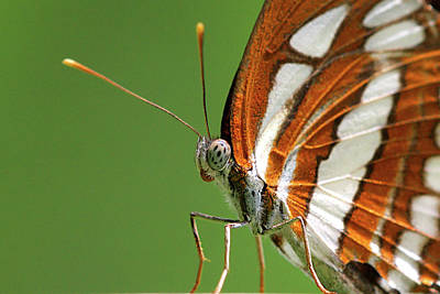 Colored Background Photograph - Close Up Of Butterfly by Annemarie van den Berg