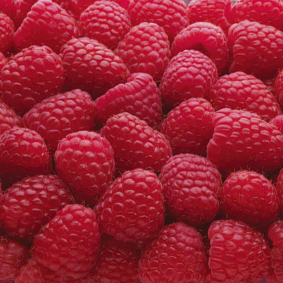 Y120817 Photograph - Close-up Of Freshly Picked Raspberries by Andrew Bret Wallis