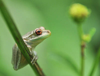 Frog Photograph - Close Up Of Frog by Lon Fong Martin