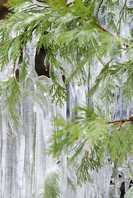 Close-up Of Ice Covered Tree Branch Art Print by James Forte