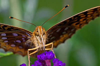 Photograph - Close Up Of Orange Butterfly by Lori Coleman