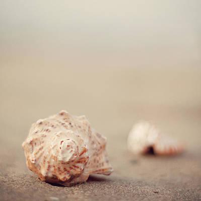 Close Up Of Shells On Beach Print by COPYRIGHT© Marianna Di Ferdinando