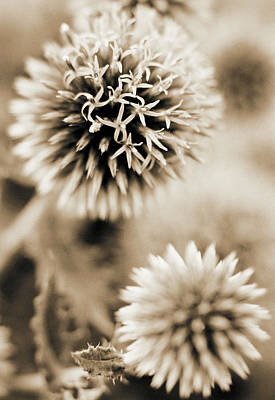 Close-up Of Spiky Plants Art Print by Andrea Sperling