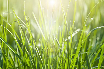 Y120817 Photograph - Close-up Of Sunlit Grass With Dew Drops by Kathy Collins