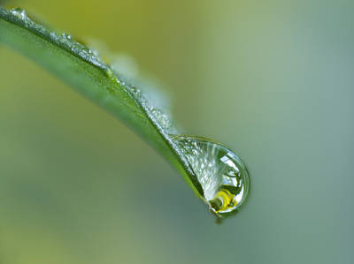 Ecu Photograph - Close Up Of Water Drop On Leaf by Darwin Wiggett