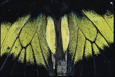 Danum Valley Conservation Area Photograph - Close View Of Iridescent Moth Wings by Mattias Klum