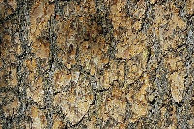 Whitebark Pines Photograph - Close View Of Whitebark Pine Tree Bark by Marc Moritsch