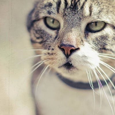 Closeup Of Face Of Tabby Cat Art Print by Cindy Prins