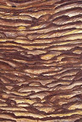 Closeup Of Sandstone Patterns, Petra, Jordan Art Print by Fred Bruemmer