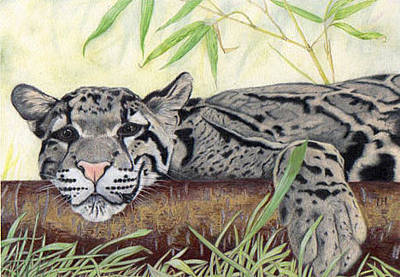 Painting - Clouded Leopard by Inger Hutton