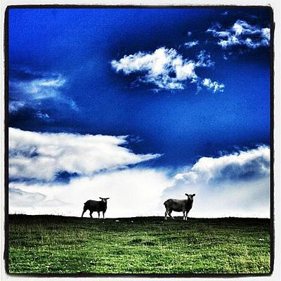 Sheep Photograph - Clouds Or Just Sheep? #sheep #clouds by Chris Barber