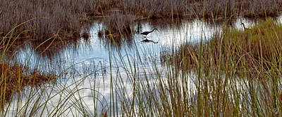 Photograph - Clouds Reflected In Marsh by Barbara Middleton