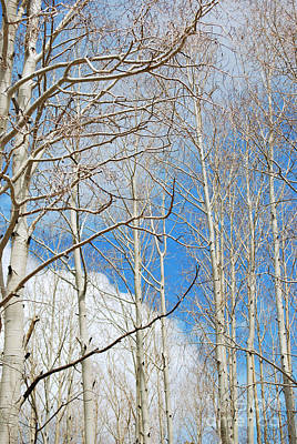 Cloudy Aspen Sky Art Print by Donna Greene
