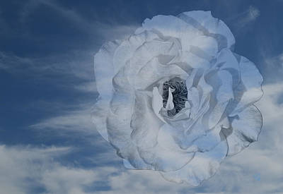 Photograph - Cloudy Rose by Barbara Middleton