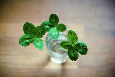 Four Leaf Clover Photograph - Clovers Leaves In Glass by Øystein Tveiten